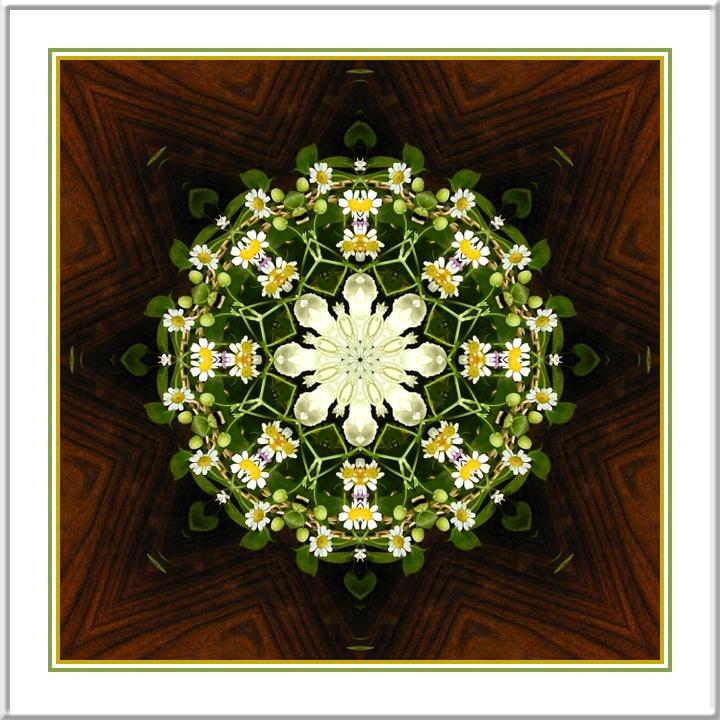 Kaleidoscope_13062